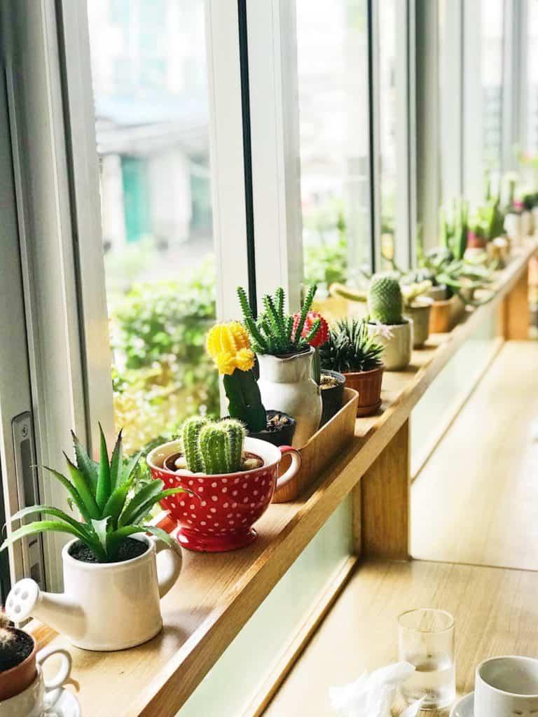 Die Unsterblichen: Kakteen - 7 unsterbliche Zimmerpflanzen