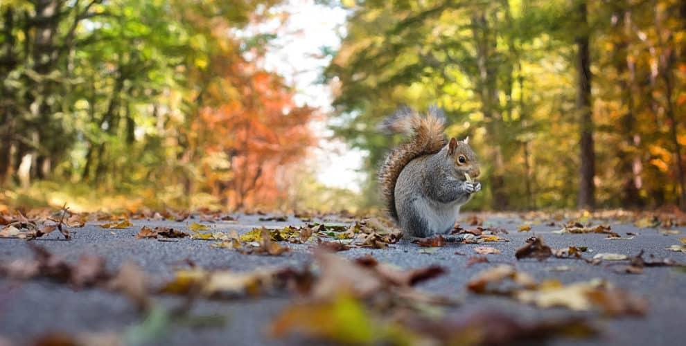 Herbst in Erlangen
