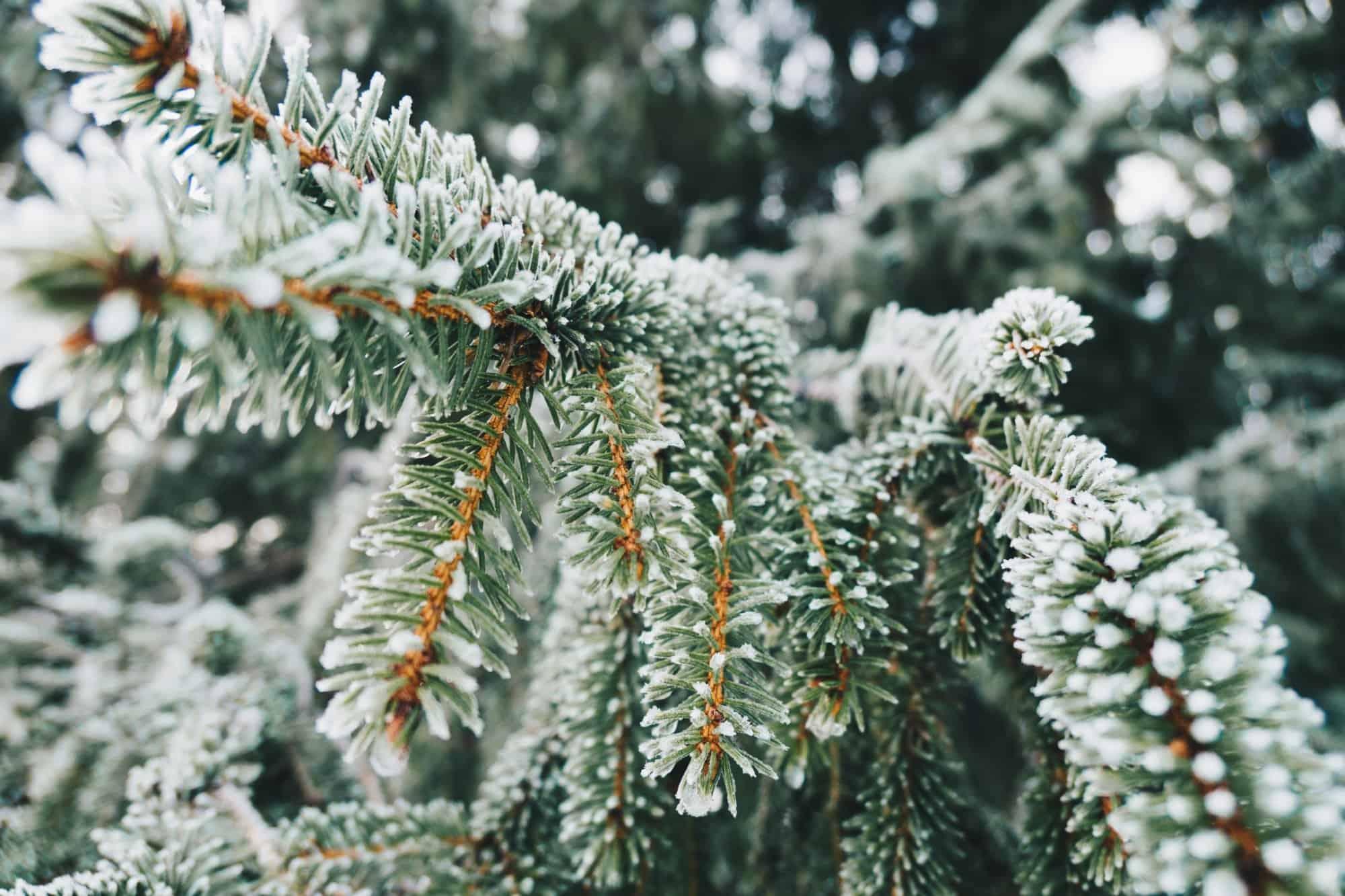 7 ziemlich gute Tipps für den Winter in Erlangen 2019