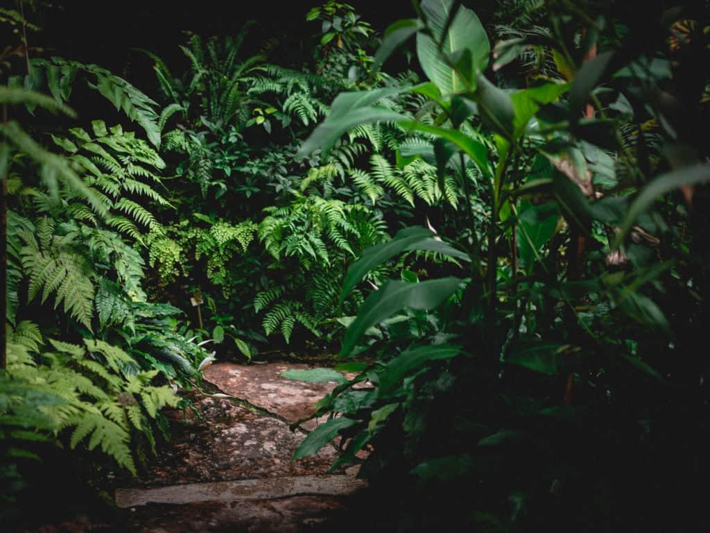botanischer-garten-A7301841-2