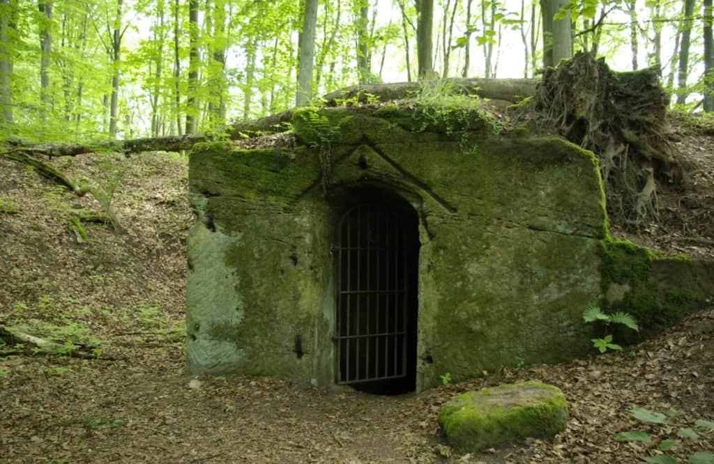 Ohrwaschl-im-Dormitzer-Forst